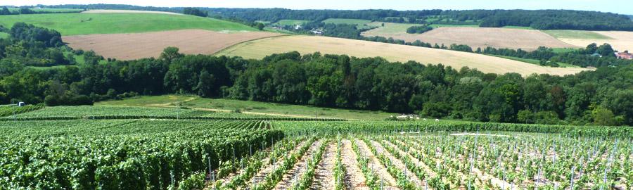 Une vue imprenable sur la Vallée de la Marne vous y attend.
